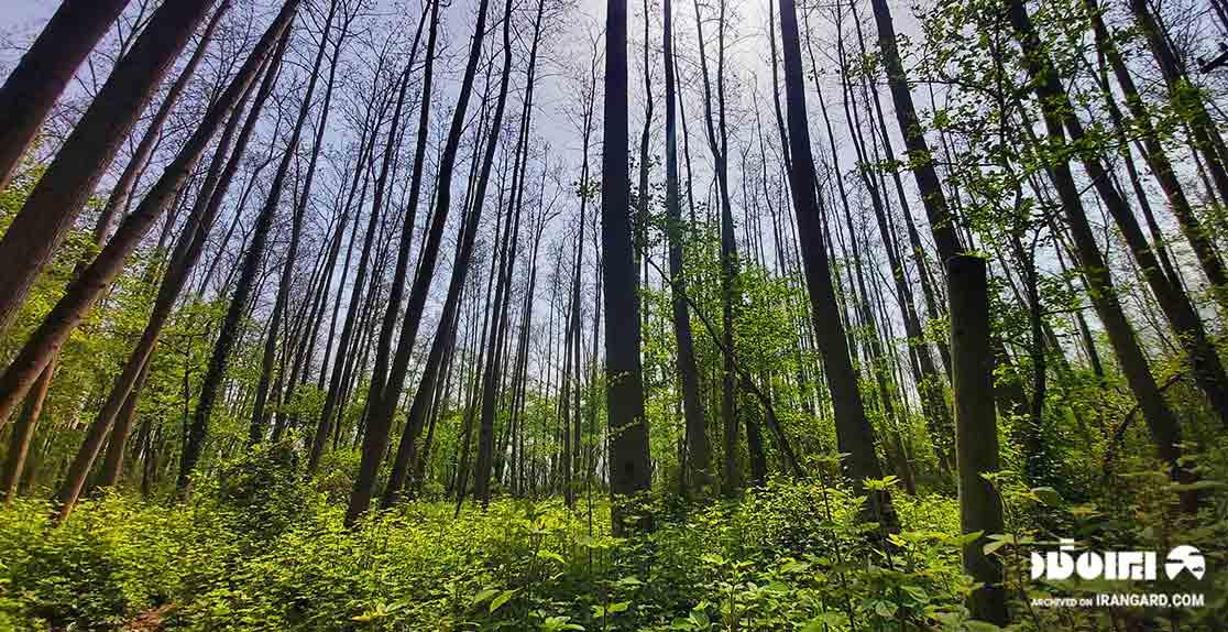 جنگل صفرابسته از دیدنیهای گیلان