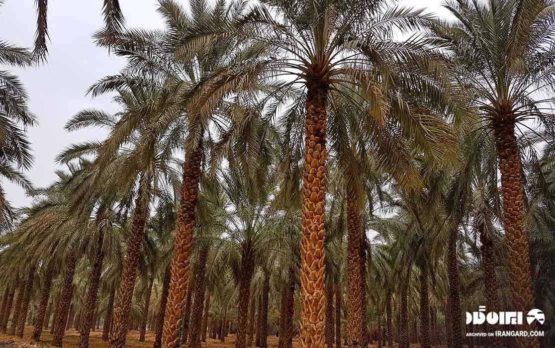 جاهای دیدنی بوشهر