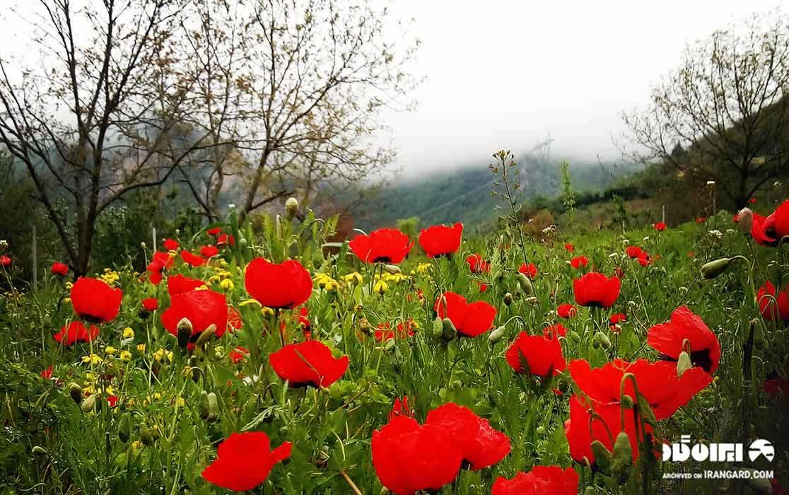 روستای شیرین آباد در نزدیکی جنگل ابر