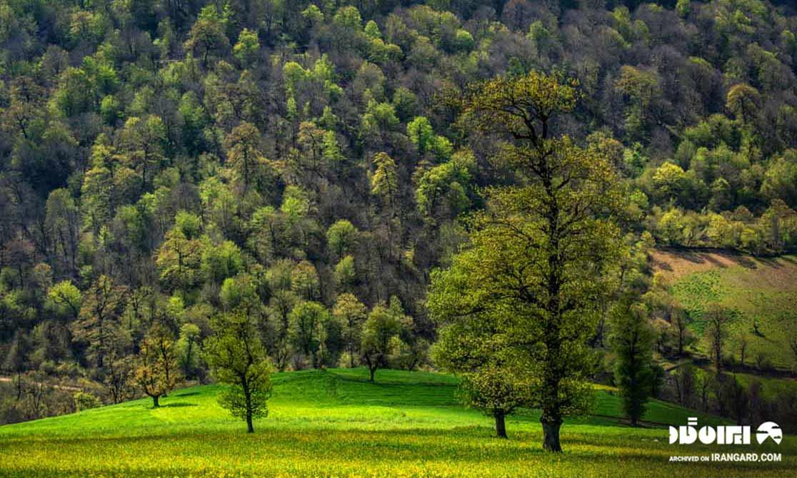 جنگل هیرکان مازندران