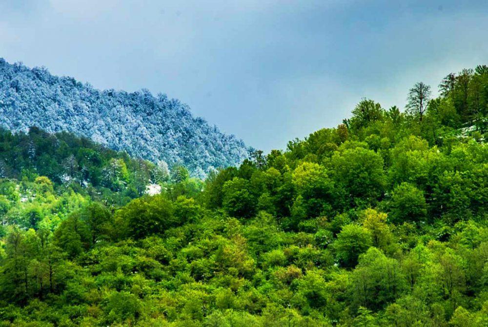 جنگل های هیرکانی