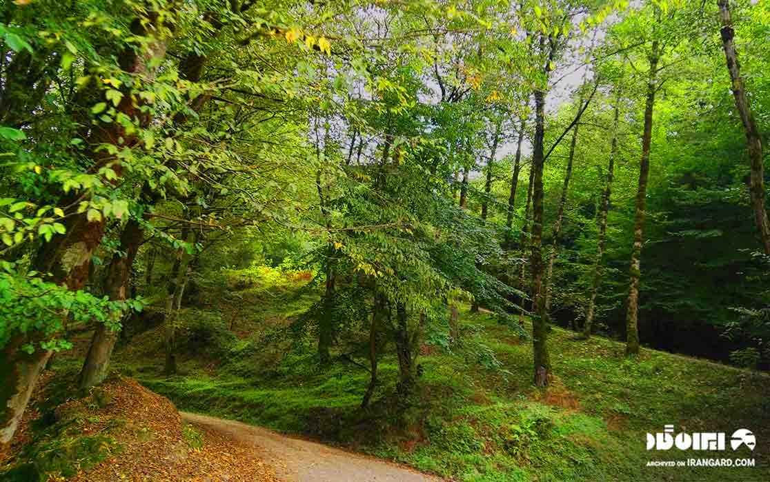 پارک جنگلی اندارگلی