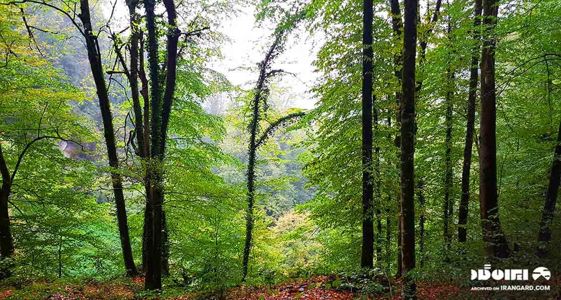 بخشی از جنگلهای هیرکانی