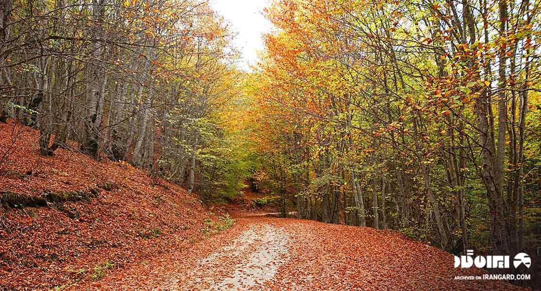 جنگل های مازیچال