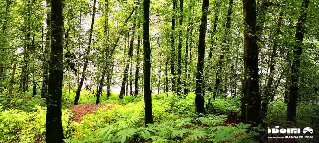 پارک جنگلی آذررود