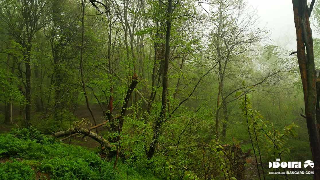 طبیعت زیبای پارک گلستان