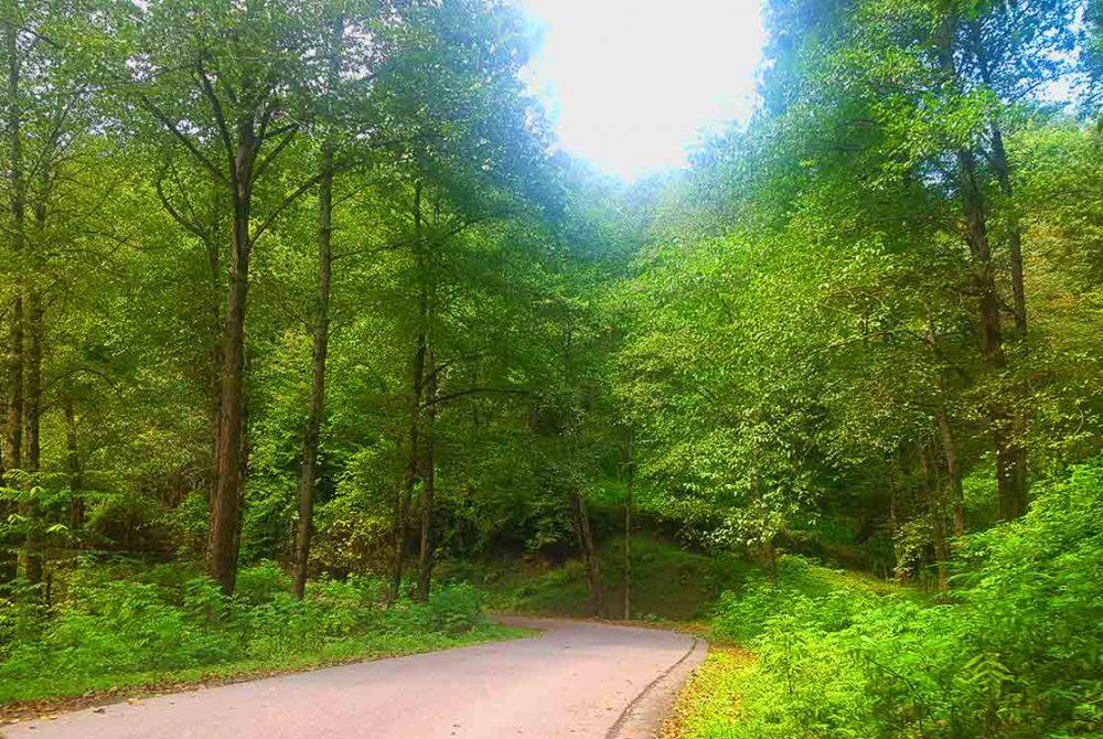 جنگل لفور کجاست