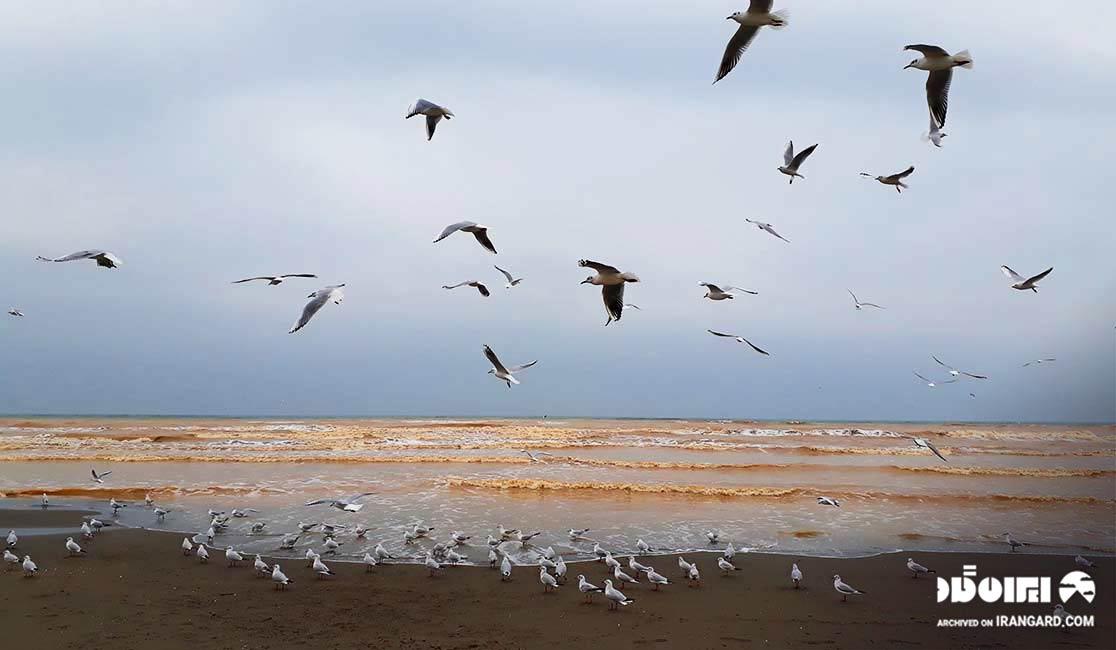 ساحل سیترا در نوشهر
